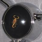 """Custom Horn Button """"Scorpion"""" For Oldsmobile"""